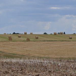 Agriculture à Cravant dans le Loiret (45)