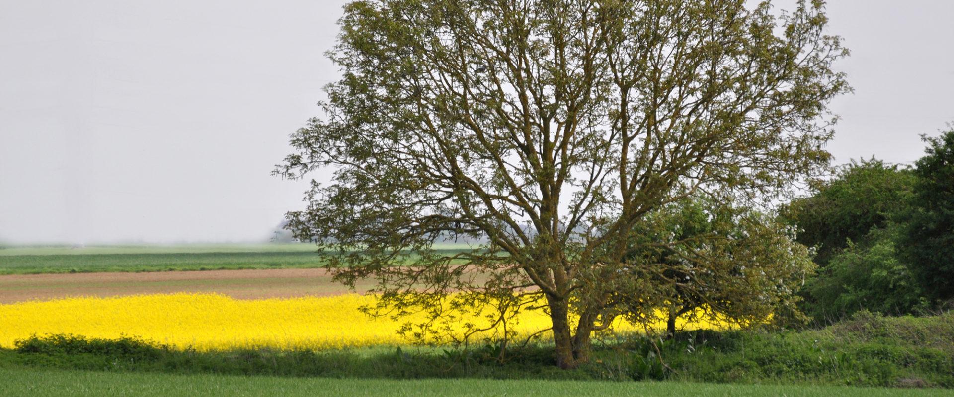 Paysage et campagne de la commune de Cravant (45)